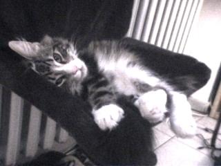 Kenzo in der Katzen-Hängematte
